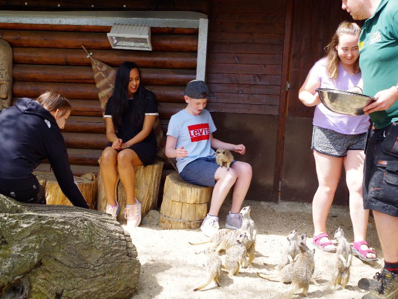 Meet The Meerkats