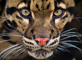 Visit The Big Cat Sanctuary
